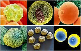 Аллергия на пыльцу простые советы