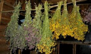 Какие травы можно самостоятельно засушить