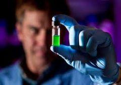 Ученые научились «доить» водоросли