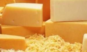 Ученые: сыр поможет продлить молодость