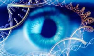 В Великобритании успешно испытали генную терапию слепоты