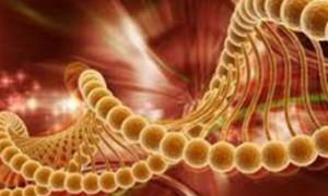 Найдены семь новых генетических факторов риска диабета 2 типа