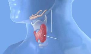 Болезни щитовидной железы и менопауза: могут быть проблемы