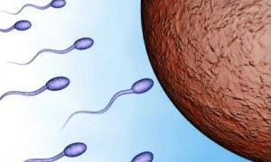 Ученые разработали новый способ лечения бесплодия у мужчин