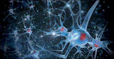 Создана карта нейронных связей мышиного мозга