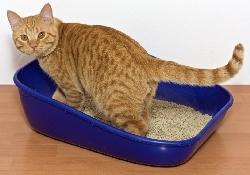 Лекарство от рака из «кошачьего» паразита