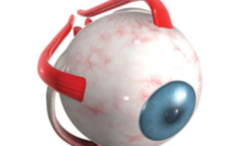Новые возможности ученых в восстановлении зрения