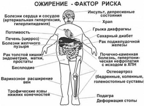 Роспотребнадзор пригрозил сибирякам массовым ожирением