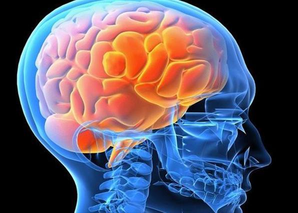 В мозге человека найден «выключатель» аппетита