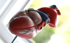 Европа объявила войну черной трансплантологии