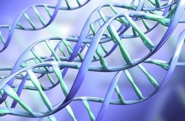 Ученые доказали, что друзья обладают общими генами