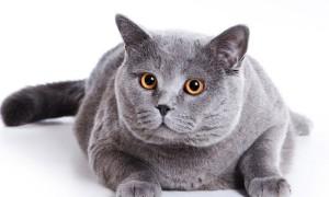 Кошки понижают давление и продлевают жизнь мужчинам, выяснили ученые