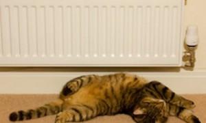 В эпидемии ожирения и диабета обвинили центральное отопление