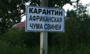 В Смоленской области выявили очередной случай заражения АЧС