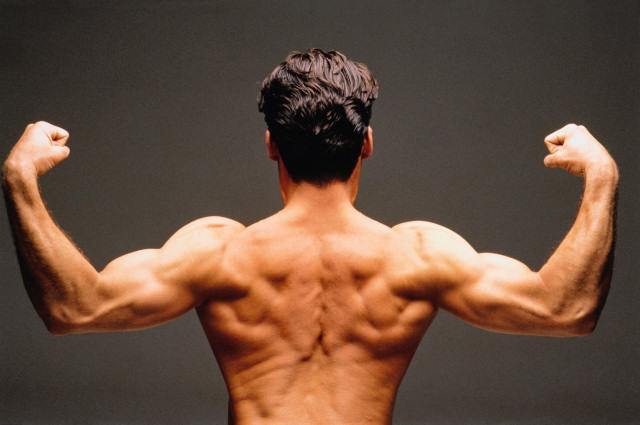 Найден новый метод восстановления атрофированных мышц
