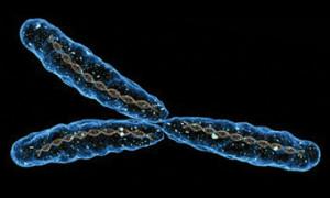 Ученые рассказали как Y-хромосома влияет на риск смерти мужчин