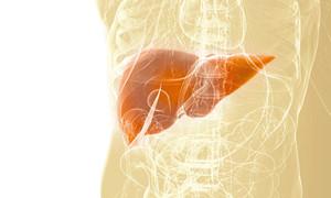 Защита печени, борьба с ожирением и антиоксидантная защита