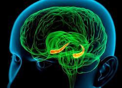 Обнаружен вирус, способный оказывать негативное влияние на когнитивные способности человека