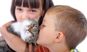 Успешно испытана сублингвальная иммунотерапия аллергии на кошек