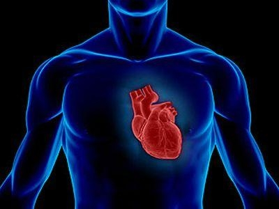 Ученые нашли ключ к созданию новых лекарств против сердечных заболеваний