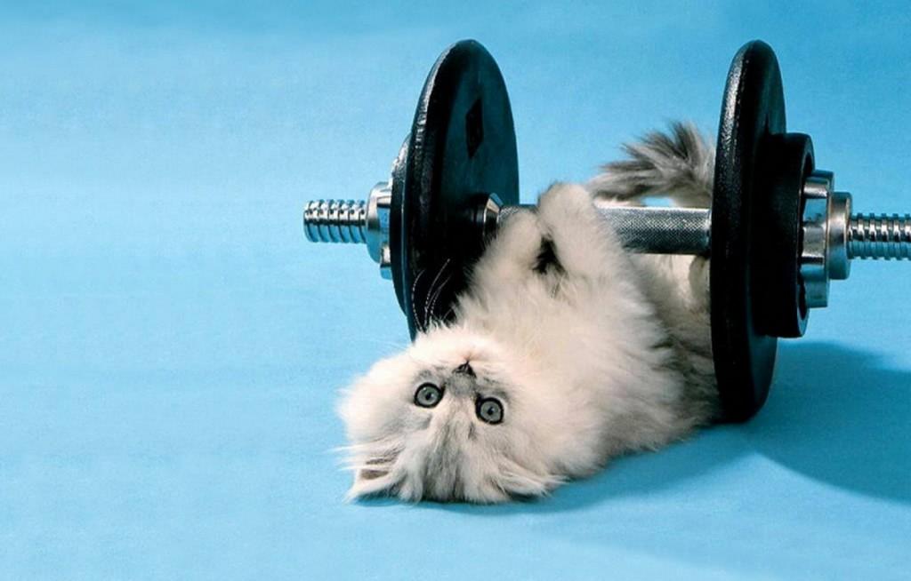 Упражнения для ленивых – похудение без усилий