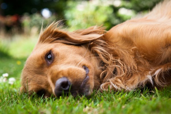 Эксперты обучили собак определять рак по запаху