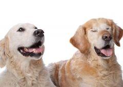 Собака в доме: «эффект пробиотиков»