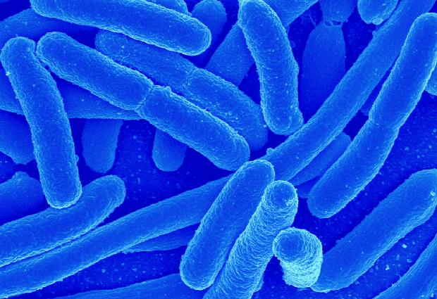 Микробы помогают вырабатывать «гормон счастья»