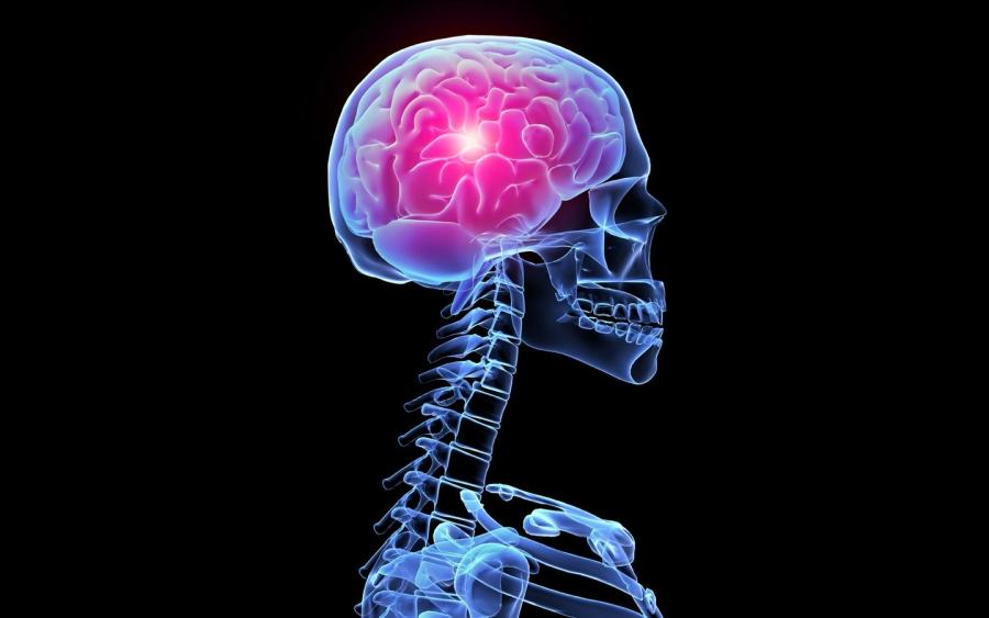 Найдены белки, которые помогут при лечении рака мозга