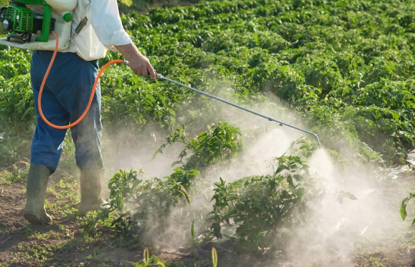 Экспозиция по пестицидам на протяжении жизни связана с повышенным риском развития сахарного диабета 2-го типа