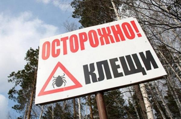 В Смоленской области втрое увеличилось количество пострадавших от клещей