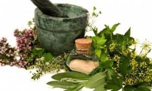 Растения: лечат или калечат?