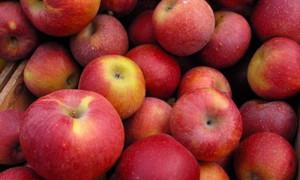 Яблоки и черника предупреждают развитие диабета
