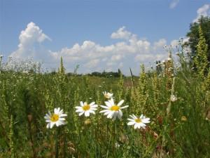 Как погода влияет на проявления аллергии