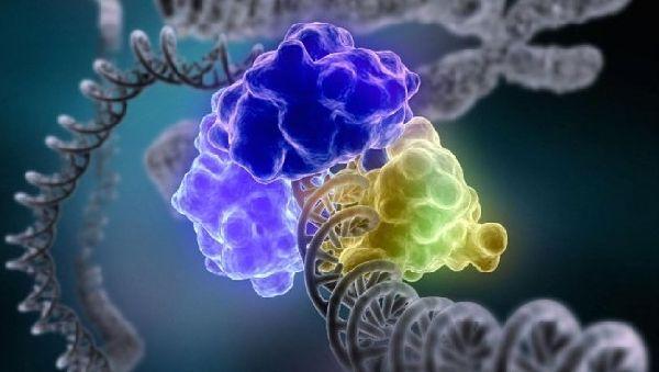 Обнаружен новый класс энзимов, восстанавливающих ДНК