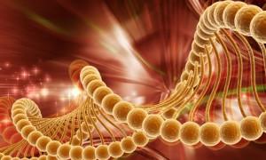 Генетическая предрасположенность к раку не всегда приводит к онкологии