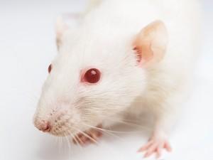 Противоопухолевый препарат может оказаться полезным при лечении миотонической дистрофии