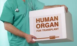 Трансплантация солидных органов как независимый фактор повышения риска смерти от онкологических заболеваний