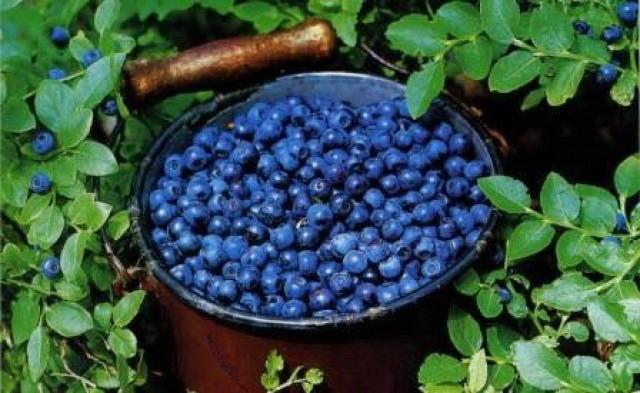 Три фрукта уберегут от диабета