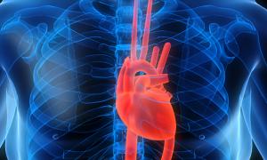Ученые узнали, какая пища губительна для сердца