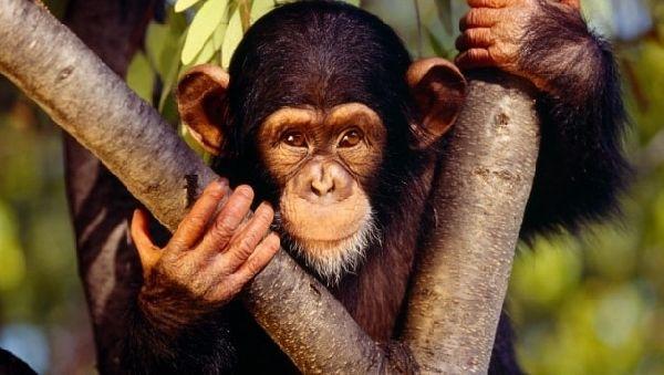 Три заблуждения оппозиционеров теории эволюции