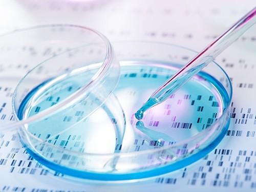 Созданы стволовые клетки с одинарным набором хромосом