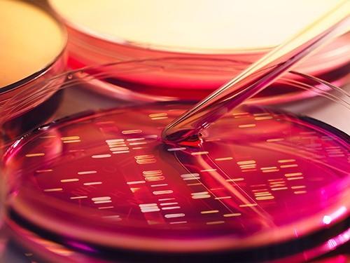 Создан микроорганизм с минимумом генов
