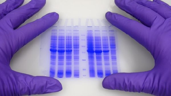 Генетическая дактилоскопия не гарантирует точность идентификации