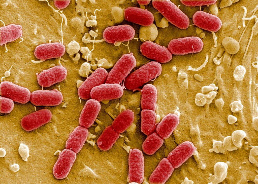 Смоляне стали чаще подхватывать кишечные инфекции