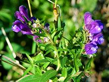 Эксперты обнаружили очередное лекарство против рака среди растений