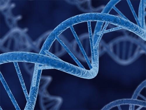 Генная терапия остановила старение