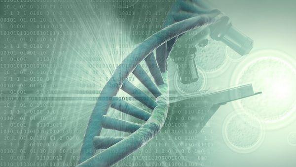 Различия в коде ДНК предскажут продолжительность жизни