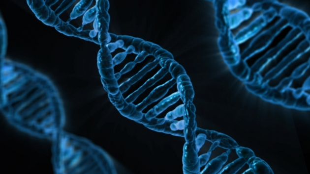 Учёные: обнаружен ряд новых генов, приводящих к раку груди