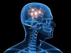 Опухолям головного мозга нужна не глюкоза, а жиры, показало исследование